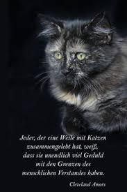 Die 414 Besten Bilder Von Katzensprüche In 2019 Hund Katze Katzen