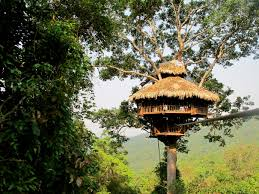 Miraculous experience with 8 most famous tree houses in Asia