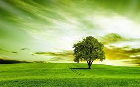 Green Tree HD Wallpapers - HD ...