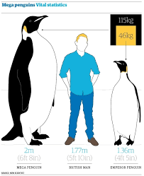 Penguin Size Chart World Of Template Format In Penguin