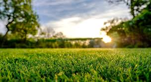 Miles Of Green Lawn Care Home