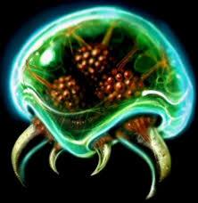 Metroid Evolution Chart Metroid Alien Species Fandom