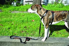 The Best Front Clip Dog Harnesses Whole Dog Journal
