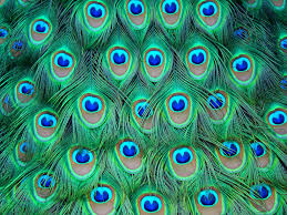 Peacock Colors Bedroom 17 Best Images About Peacock Inspired On Pinterest Peacock