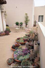 Succulent Garden Designs Best Containers Of Succulents For The PatioFor Us Northerners How About