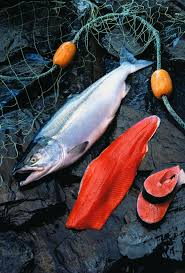 sockeye salmon look at that unmistakable color