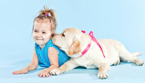 Are Labs good dogs? Especially when it comes to life as a family pet?
