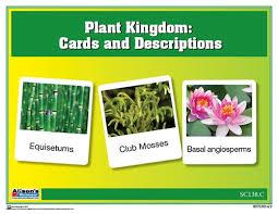 Plant Kingdom Chart W Cards