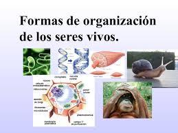 3 formas de organización de los seres vivos