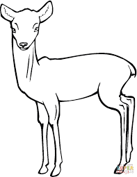 Roe deer fawn coloring page | Free Printable Coloring Pages