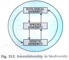 essay on biodiversity top essays biodiversity biology interrelationship in biodiversity