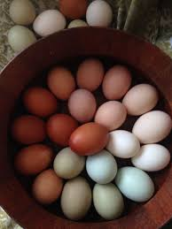 Egg Color Chart