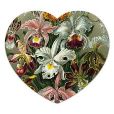 "Коврик для мышки (сердце) ""<b>Орхидеи</b> (Orchideae, Ernst Haeckel ..."