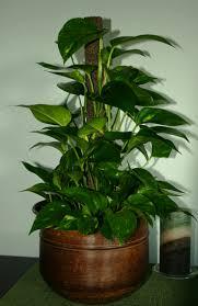 elegant low light indoor plants u swish with low light indoor plants