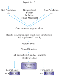 Heredity And Evolution Important Notes For Board