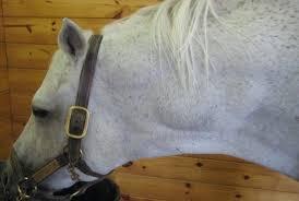Cancer Comparison Across Species Humans Horses Dogs