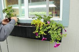 Flower Window Box Designs Step By Step Guide To Planting A Window Box