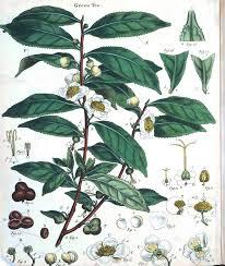 Botanical Chart Print Botanical Educational Charts And Plates 2 Vintage