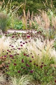 Small Picture Best 20 Ornamental grass landscape ideas on Pinterest Landscape