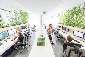 modern office plants. Rules Studio With Indoor Plants Modern Office D