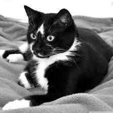 cute black cats with yellow eyes. Beautiful Cute Cuteblackkittenswithyelloweyeshdfreecutecatblack Andwhitehdipadwallpaperdesignsimagejpg Throughout Cute Black Cats With Yellow Eyes T