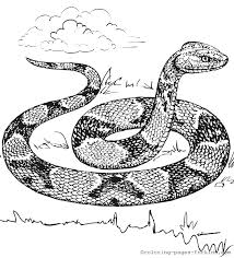 Small Picture snake coloring page for adults coloring pages for kids