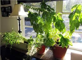 Indoor Kitchen Gardening Collection Indoor Kitchen Herb Garden Pictures Garden And Kitchen