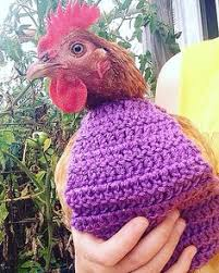 Chicken Sweater Pattern Extraordinary You Will Love These Knitted Chicken Sweaters Free Patterns Jumper