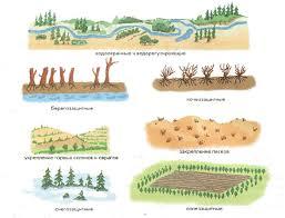 Значение и роль живой природы флоры и фауны Экология Реферат  Рис 159 Защитные свойства леса
