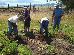 Resultado de imagen para productores agrícolas papa