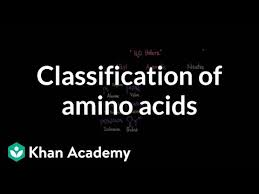 20 Amino Acids Chart Pdf Classification Of Amino Acids Video Khan Academy