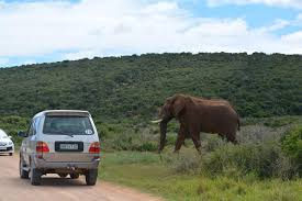 elephant car insurance contact number 03 raipurnews
