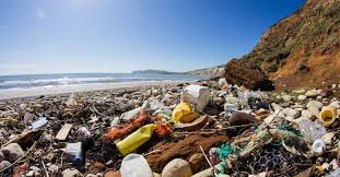 Image result for single use plastic collins dictionary