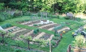 my hillside vegetable garden