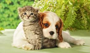 cute kittens and puppies together.  Cute Cute Kitten And Dog In Kittens And Puppies Together D