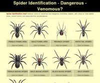 Spider Identification Chart Australia Australian Spider Id Chart Wrong On The Internet Bogus