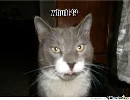 Shocked Cat by ihab.elyalaoui - Meme Center via Relatably.com