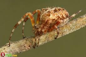 شركة مكافحة النمل الابيض بالرياض0549233822 Images?q=tbn:ANd9GcTjpoQhlLzUfKqhfFtOPswSVCgTCUW3lqQFvssUWR04LcCz9dCP