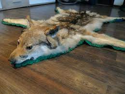 wolf skin rug with full head mount taxidermy rare antique uk faux