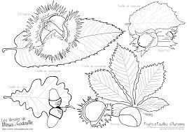 Coloriages Fruits Feuilles Dautomne Coloriage Automne Marron
