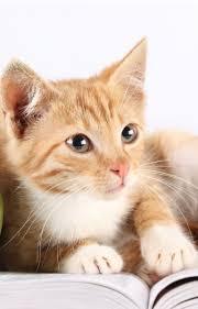 cat wallpaper iphone 6. Brilliant Iphone Cutie Cat Iphone 6 Wallpaper Throughout Wallpaper Iphone P