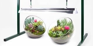 Succulent Grow Light Setup Grow Light Basics Artificial Lighting For Succulents