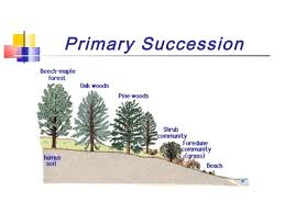 Primary Succession And Secondary Succession Venn Diagram Wynnnealhtml Flow Chart Of Ecological Succession 48468x648