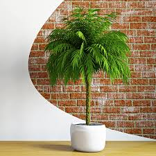 Best office pictures Office Furniture Best Office Plants To Boost Your Productivity New York Magazine Office Plants To Boost Your Productivity Pollen Nation