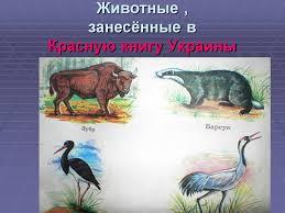 Какие Животные Занесены В Красную Книгу Татарстана kino global какие животные занесены в красную книгу татарстана