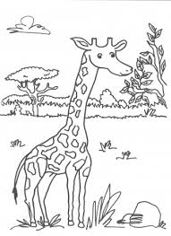 Giraffe Kleurplaten