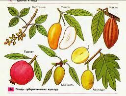 Образование семян и плодов Гипермаркет знаний Плоды