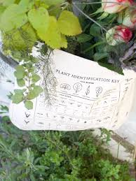 Herb Plant Identification Chart Plant Identification Foraging Tote Bag 100 Organic Cotton