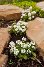 Small Picture 22 best shade plants and ground cover images on Pinterest Shade