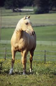 Foal Color Chart Equine Coat Color Wikipedia